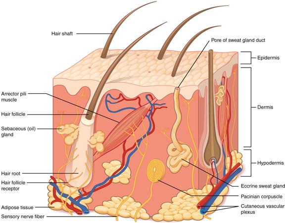 La importancia de la nutrición para la piel