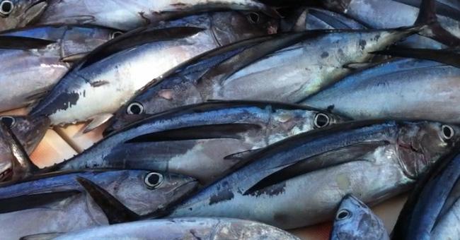 El Bonito del Norte, uno de los pescados azules más saludables