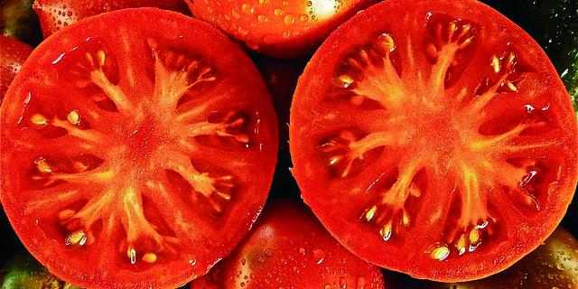 Tópicos sobre el tomate