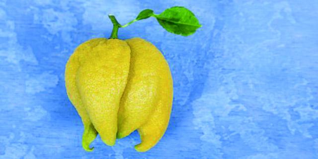 Fruta fea para gente lista