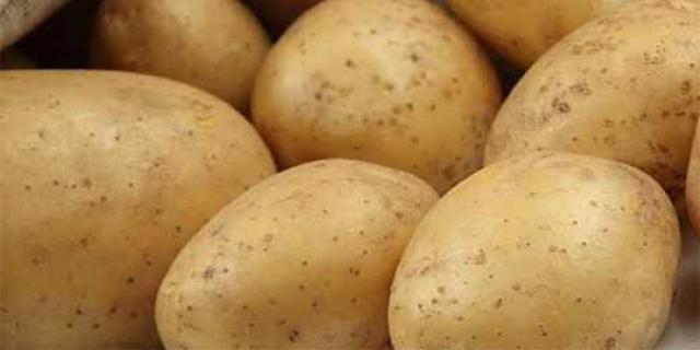 Fiesta de la patata en Coristanco (A Coruña)