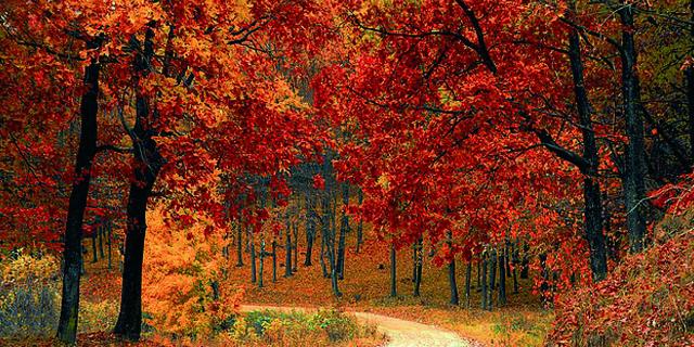 Disfrutar el otoño con salud