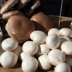 Que diferencia hai entre fungos e cogomelos?
