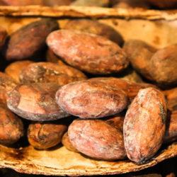 O cacao, saboroso e enerxético