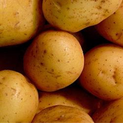 La patata gallega, garantía de calidad