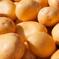 Patata nueva o temprana, un producto de temporada