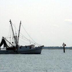 Innovaciones en la búsqueda de productos pesqueros sostenibles