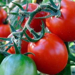 El cambio climático cambiará las estaciones de crecimiento de los cultivos y su ubicación