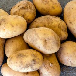 La patata vieja o tardía