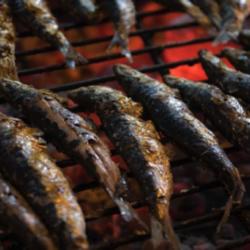 Sardinas, una especie en vías de recuperación